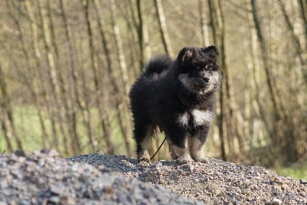 9 Wochen alt, erster Spaziergang im Wald