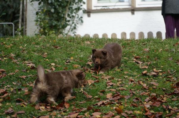 6 Wochen alt, Bjarka und Bosse
