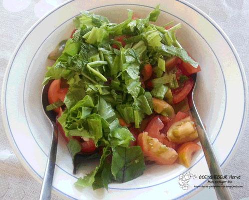 Salade composée à partir de diverses variétés de tomates, betteraves (feuilles), salade, oignons, échalotes, ails et des aromates du jardin.