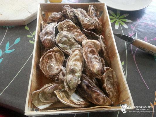 Panier d'huîtres.