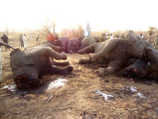 Bracconieri negri macellano 89 elefanti in Ciad, tra cui più di 30 gestanti. Marzo 2013.