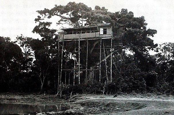 Treetops Lodge. Il 6 febbraio 1952, l'allora principessa Elisabetta in visita al Treetops Lodge soggiornò in una delle famose cabine che si trovano in alto tra gli alberi.