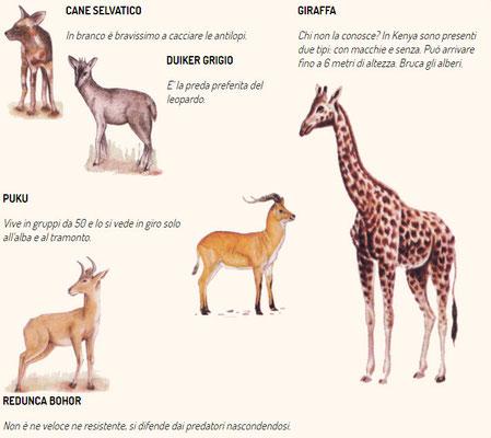 La fauna del Kenya e della Tanzania