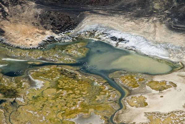 Lago Logipi e fenicotteri. Acqua colorata all'estremità settentrionale del lago