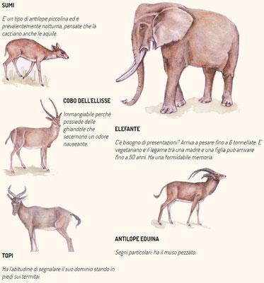 Fauna del Kenya e della Tanzania