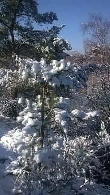 Winterimpression I