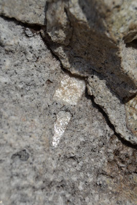 Sanidinkristalle am Drachenfels