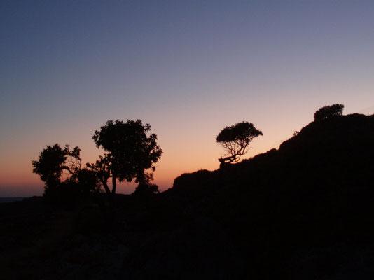 Blauer Himmel, angenehme Temperaturen und ein erholsames Klima. Malerische Buchten und Strände, Kultur und Kunstgenuss, mallorquinische Spezialitäten und herrlicher Inselwein. Es gibt viele Gründe, um nach Mallorca zu reisen.