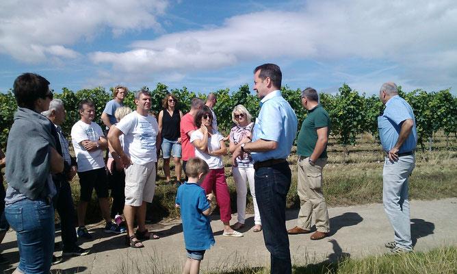 Wissenswertes über den Weinanbau direkt vor Ort