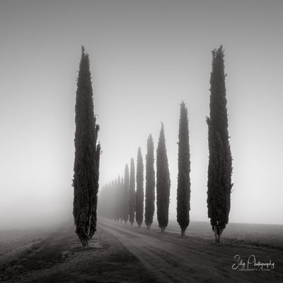 Italien / Toskana / Castiglione d'Orcia / Zypressenallee, Nebel, Langzeitbelichtung, 2019, ©Silly Photography