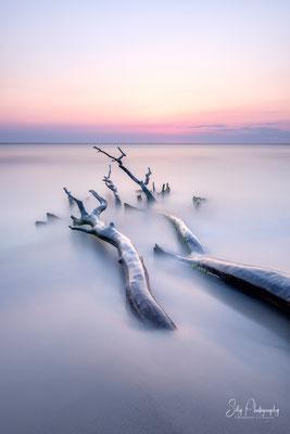 Darß / Weststrand, Ostsee, Baum,Sonnenuntergang, Langzeitbelichtung, 2018, © Silly Photography