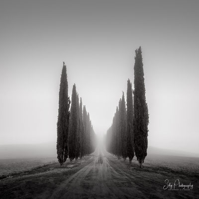 Italien / Toskana / Castiglione d'Orcia / Zypressenallee, Nebel, Langzeitbelichtung, 2019, ©Silly Photography