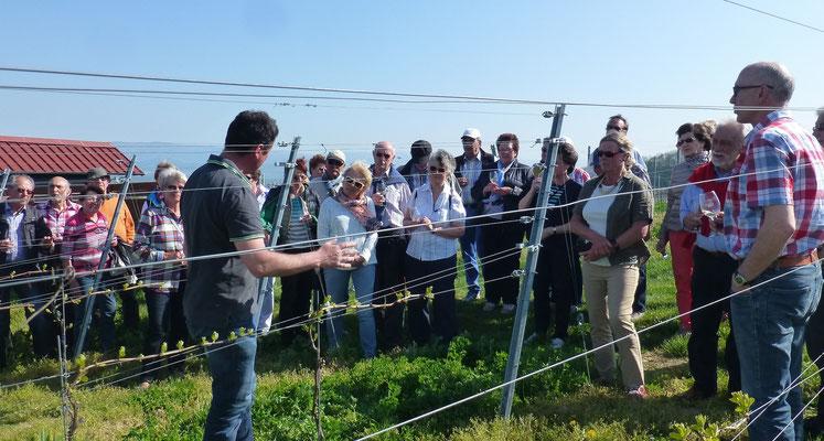 Herr Köbelin erklärt seine Arbeit im Weinberg