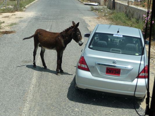 strenge Eselskontrolle im Naturschutzgebiet