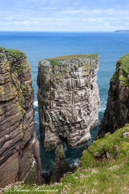 Felsnadel Vogelinsel Handa - Schottland 2015