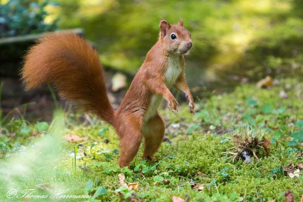 Wo sind die Nüsse?
