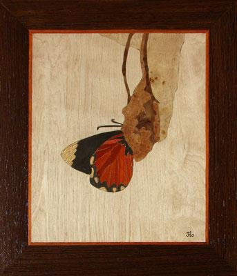 Marqueterie - exposition Biviers 2013 - Métamorphose du papillon