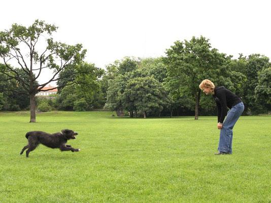 Hundeausbildung Privatunterricht