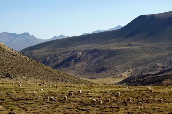 Réserve naturelle de lamas & alpacas