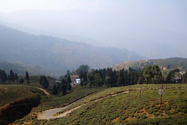 Plantation de thé Happy Valley (fournisseur de Harrod's)