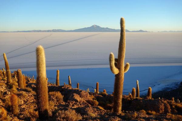 Salar d'Uyuni - Lever du soleil depuis l'île aux cactus