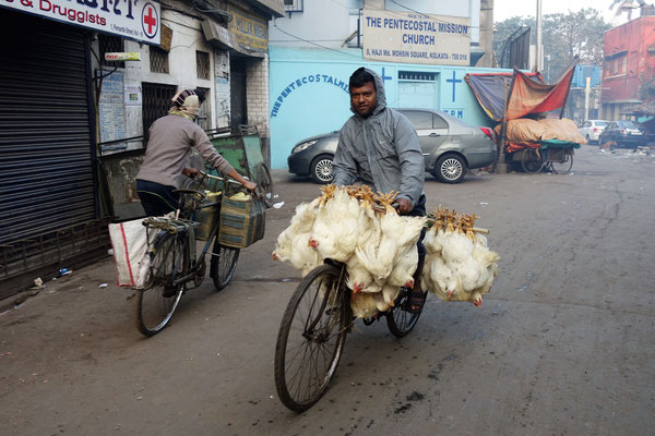 Bicyclette transportant des poulets VIVANTS !!!