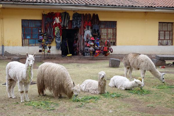 Lamas :-)