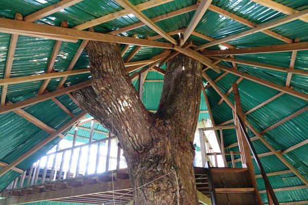La cabane dans les arbres où nous avons dormi :-)