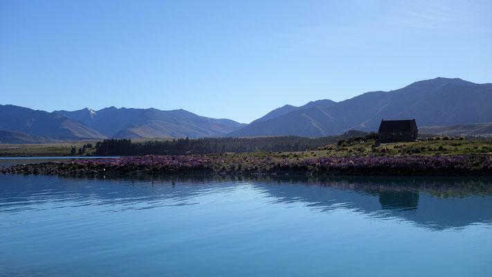 Le Lac Tekapo au petit matin, que surplombe The Church of the Good Shepherd