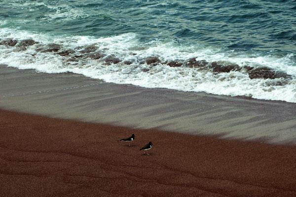 La Réserve Naturelle de Paracas - Plage rouge