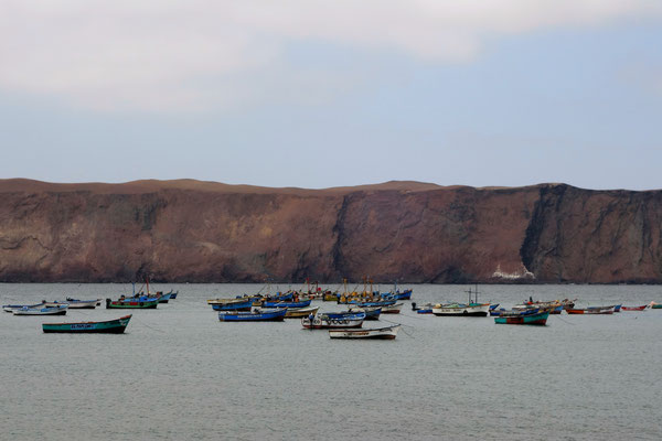 La Réserve Naturelle de Paracas - Lagunillas