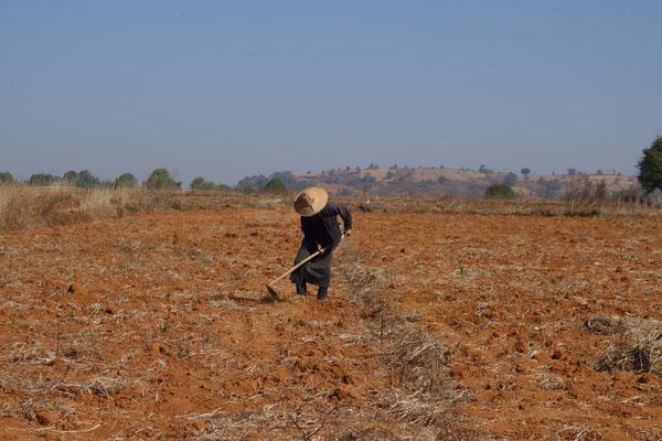 Travail dans les champs