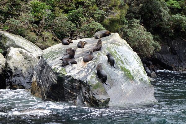 Croisière dans Milford Sound