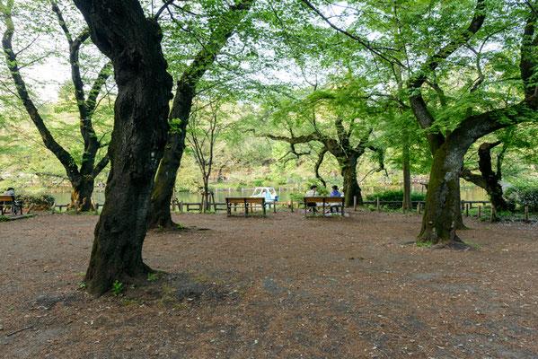 井の頭恩寵公園1