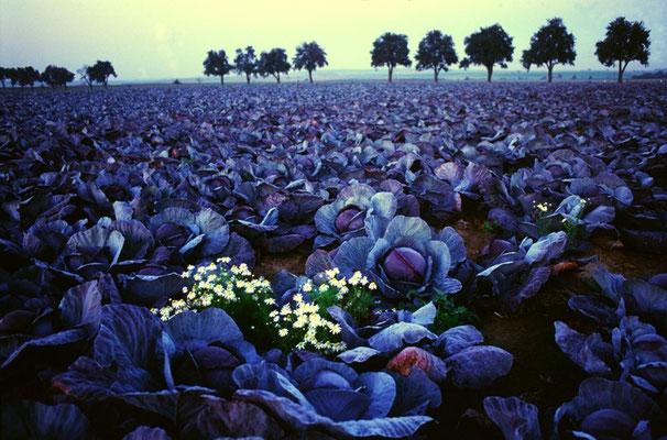 """""""im rotkrautland"""" - otto kindermann - urkunde bezirksfotoschau 2002 sonderthema"""