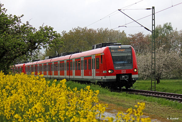 423 893 im regnerischen Kronberg auf dem Weg nach Langen, 15. April 2017.