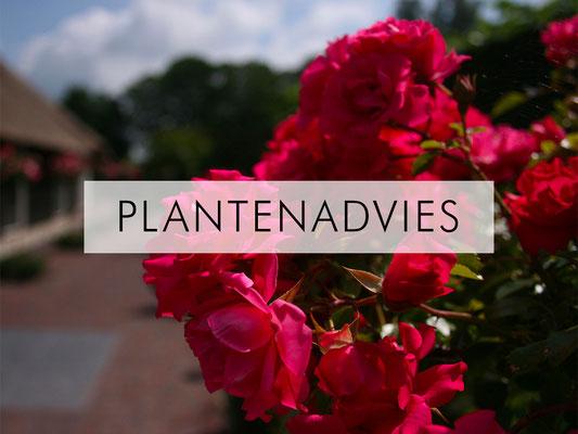 Plantenadvies