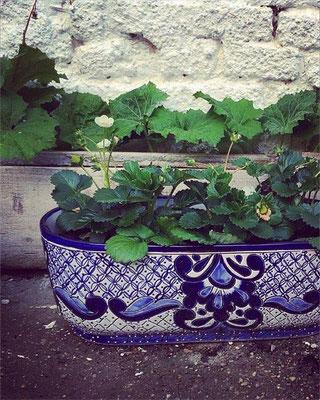 Blumenkasten blau weiss antik aus Keramik