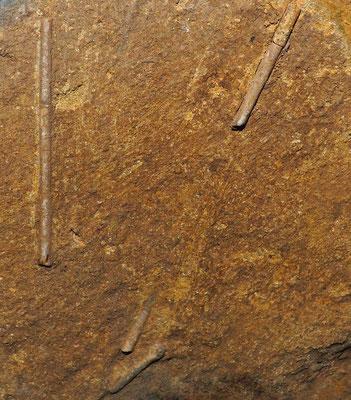 Grotta all'Alpe di Sella: resti fossili ancora indeterminati