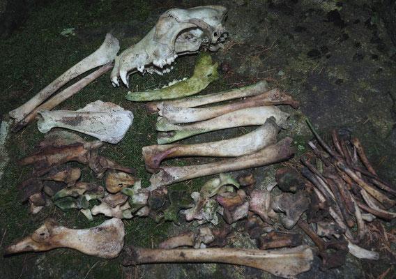 Grotta Presso l'Alpe di Cava: resti ossei raccolti alla base del pozzo