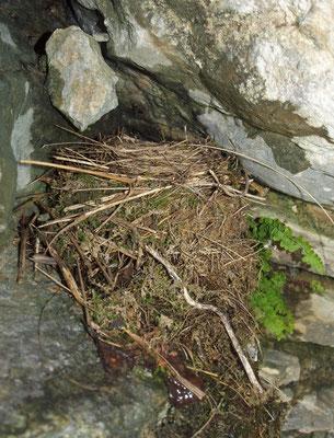 Grotticella Sotto la Cima del Colmegnone: nido