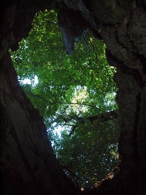 Grotta della Colma del Bosco