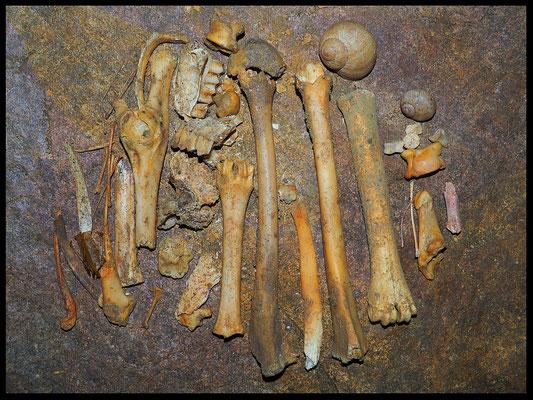 Resti ossei di origine animale