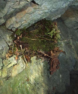 La Tana: nido