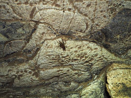 Grotta Sopra il Buco del Riccio