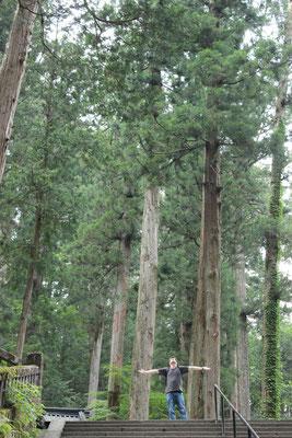 Bäume, Bäume,... (Taiyuinbyo-Schrein)