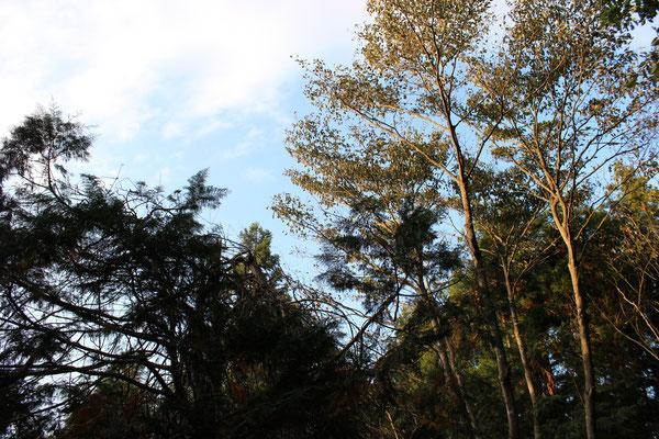 Herbstzeit ist Wanderzeit
