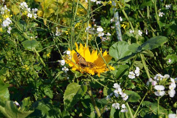 Blüte mit Schmetterling