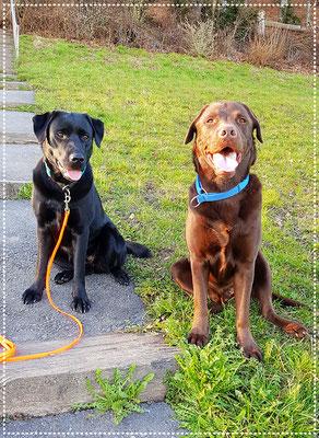 Keno und Yuma geniessen ihre Freizeit bei einem schönen Spaziergang
