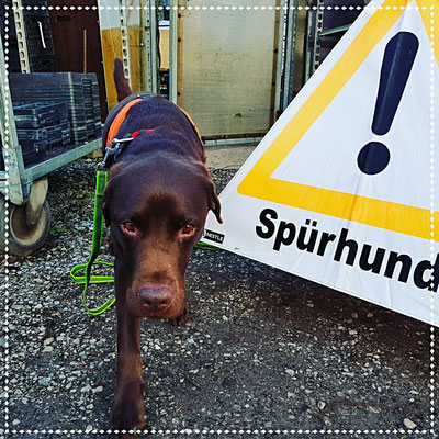 Die Sicherheit der Spürhunde steht immer an erster Stelle!